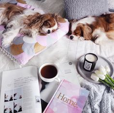 Puppies in flatlays via @leerachel Instagram