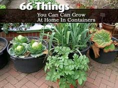 66 things you can grow at home