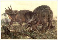 32_prean_burian_triceratops.jpg 1,032×712 pixels