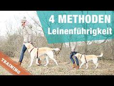 4 METHODEN | Leinenführigkeit | Hund BEI FUß Training Hundeerziehung walk leash pulling heel - YouTube