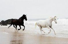 Black and white horse enjoying a run on the beach.