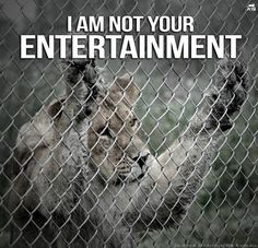 Against zoo, against circus - support animal right stop animal abuse. Animal is not for human entertainment!