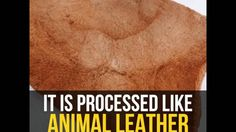 Leather made from mushrooms - Google Search