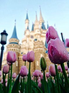 Spring at Magic Kingdom Walt Disney World I Disney I Cinderella's Castle Disney Vacations, Disney Trips, Disney Parks, Walt Disney World, Disney Pixar, Disney World Princess, Princess Anna, Disney Theme, Disney Love