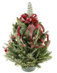 Decorating a Christmas Tree With Ribbon [Slideshow]