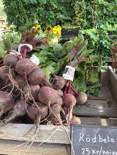 Var Dag i Mitt Liv: Vackra grönsaker