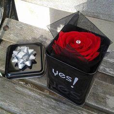 """""""Boite métal prête à offrir"""" ROSE naturelle éternelle rouge En savoir plus sur http://www.artifleurs-fleurs-artificielles.com/pages/nouveautes.html#td8luREKWFJmpf5V.99"""