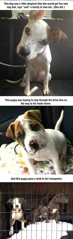 cool-dogs-free-happy-faces-foster-home