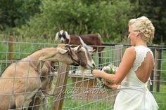 Aamodt's Apple Farm Weddings