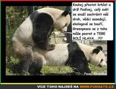 Funny Memes, Jokes, Enrique Iglesias, Adult Humor, Pet Birds, Panda, Funny Stuff, Cute Animals, Lol
