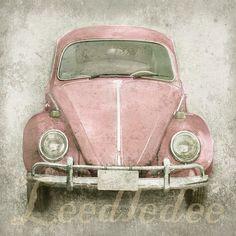 Escarabajo rosa
