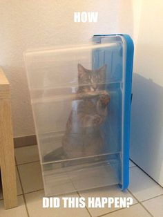 Schrödinger's Cat's Long Lost Cousin