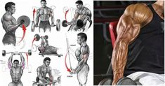 Bulk Up Your Biceps With Our 100 Bicep Curl Challenge - Free Gym & Fitness Workouts Gym Workouts For Men, Killer Workouts, Fun Workouts, Fitness Workouts, Gym Fitness, Workout Tips, Big Biceps, Biceps And Triceps, Arm Muscles