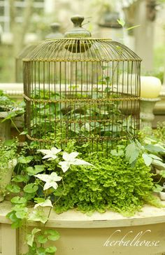 Old bird cage, planter...so doing this with mine this spring.