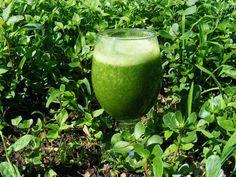 La papayaes un alimento antiinflamatorio, sobre todode todo elaparato digestivo,gracias a la papaína, una enzima que ayuda en la digestión de las proteínas.