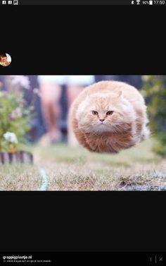 vliegende kat