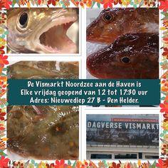 Elke vrijdag verse vis op de vismarkt Noordzee aan de Haven in Den Helder.