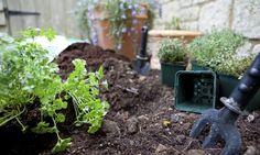 Tareas de jardinería en septiembre