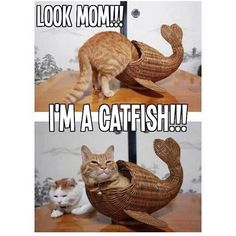 To catch the fish, you must first become the fish funny memes meme humor funny memes animal memes cat memes Funny Animal Jokes, Funny Cat Memes, Cute Funny Animals, Cute Baby Animals, Funny Cats, Funny Quotes, Funniest Memes, Cat Quotes, Memes Humor