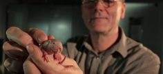 #Este roedor puede vivir 18 minutos sin oxígeno - Diario Uno: Diario Uno Este roedor puede vivir 18 minutos sin oxígeno Diario Uno La rata…