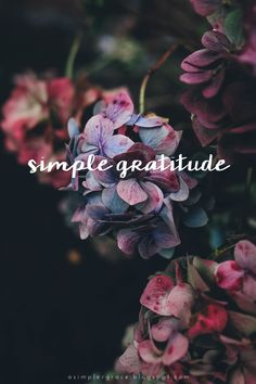 Simple Gratitude | 30 - A weekly series focusing on practicing gratitude.  #gratefulheart #gratitude #feelingthankful