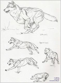 Wolf pen-sketches by blayrd on DeviantArt - drawings_pintous Animal Sketches, Art Drawings Sketches, Animal Drawings, Wolf Drawings, Wolf Sketch, Pen Sketch, Sketch Drawing, Drawing Poses, Drawing Ideas