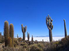 cactus | par Recovering Vagabond