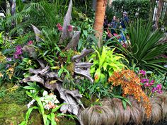 https://flic.kr/p/GZm3KY | Orchids, Conservatory Display, Longwood Gardens IMG_7992 | Longwood Gardens, Kennett Square, PA USA Photograph by Roy Kelley Roy and Dolores Kelley Photographs