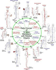 Meridian hourly flow printable chart wheel chinese medicine agopuntura meridiani reinformazione dei meridiani e del dna ccuart Image collections