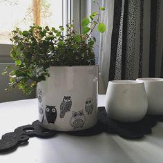 Perjantai! Mukavaa viikonlopun aattoa kaikille!  #ruukku #viherkasvi #kasvi #keittiö #kitchen #myhome #home #koti #sisustus #asetelma