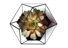 Large Geometric Glass Terrarium / by WhiteLiesJewelry on Etsy