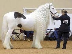 Horse prinsess