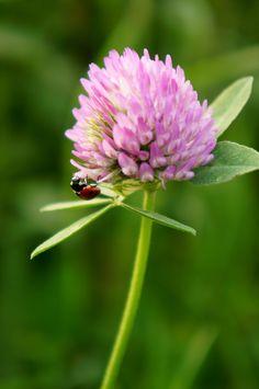 Ladybug  --by Łukasz Jeżyna