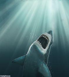 jaws shark - Google Search