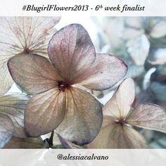 #BlugirlFlowers2013 Instagram Photo Contest finalist @alessiacalvano
