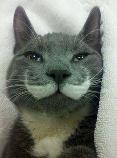 A meow-stache.