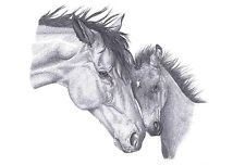 MARE & FOAL (1) Horse pencil art drawing picture Limited Edition print UK artist