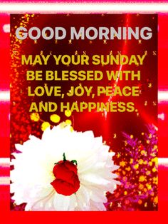 Blessed Sunday Morning, Blessed Week, Blessed Friday, Good Morning Wishes, Good Morning Quotes, Morning Gif, Morning Greeting, Days Of Week, Trust God