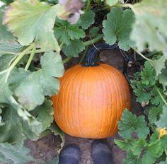Pumpkin Farm, Autumn, Fall, Wonderful Time, Spring, Flowers, Fall Season, Fall Season, Royal Icing Flowers