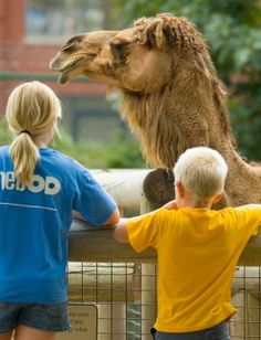 Featuring up-close viewing of more than 400 animals with the child's eye view in mind. See Humboldt penguins, Amur leopards, Dromedary camels, river otters, eagles, crocodiles, lemurs and several species of primates.
