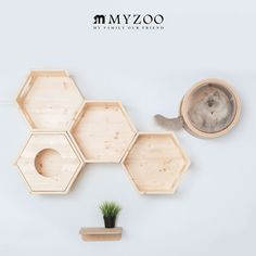 sarasa-designstore: my zoo cat cat tower catwalk cat step [<MYZOO Mai zoo> hexagon house busy cat ※ one piece of article sale] # SALE_PT Cat Tree Plans, Cat Wall Furniture, Cat Gym, Animal Gato, Living With Cats, Cat Shelves, Cat Climbing, Pet Life, Pet Grooming