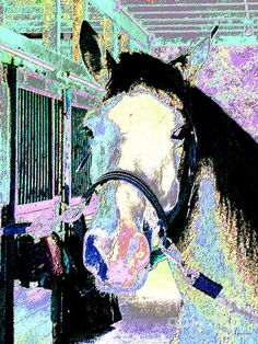 Horse of Many Colors by Annie Zeno--photograph digital art