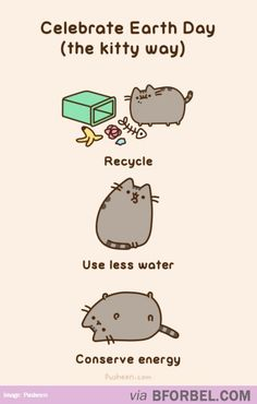 Earth Day The Kitty Way…