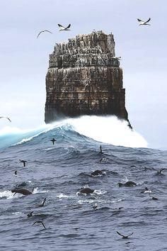 A feeding frenzy of seals and albatross at Eddistone Rock off Tasmania's rugged south coast