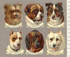 Hundhuvuden_6-st   Flickr - Photo Sharing!