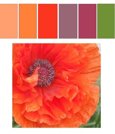 Nature offers up some great colors. This week's color palette is inspired by the first poppy bloom of the season. Have a great week and remember to tag your photos for this week with Colour Pallette, Color Palate, Colour Schemes, Color Patterns, Color Combos, Design Seeds, Home And Deco, Color Swatches, Color Stories