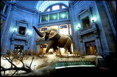 Smithsonian National Museum of Natural History, Washington DC
