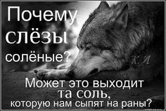 Russian Memes, Man Humor, Animal Memes, Writing Prompts, Best Quotes, Psychology, Funny Memes, Inspirational Quotes, Ocean