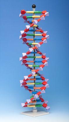 Modelo de ADN compacto, 22 capas AMDNA-060-22
