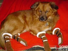 Salt's been harsh on the dog paws, DIY dog boots, BEST INSTRUCTIONS